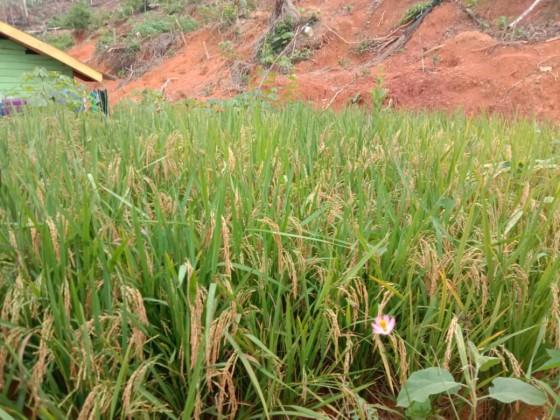 pelatihan konservasi lahan